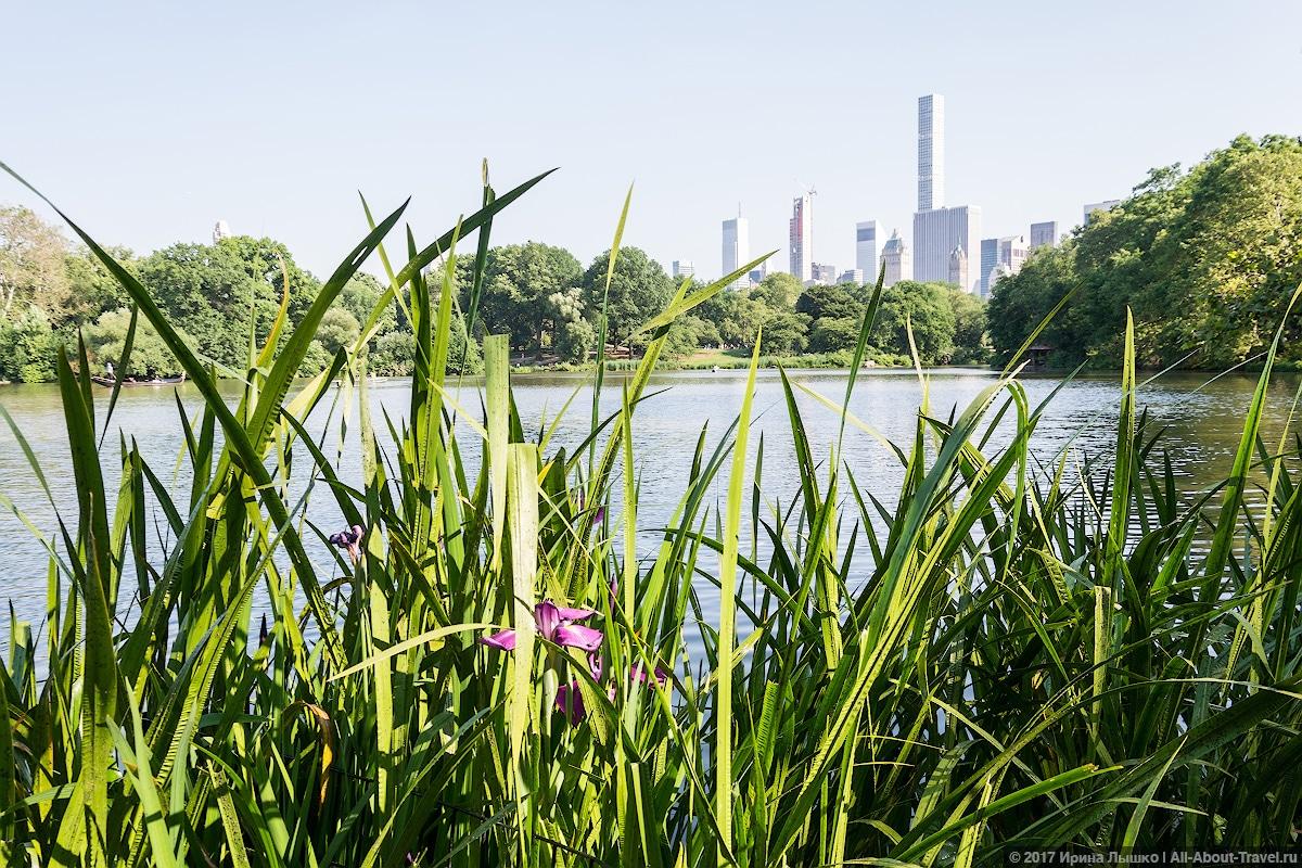 37 New York Central Park - Первый раз в Нью-Йорке: Таймс-Сквер, Центральный парк и Чайнатаун