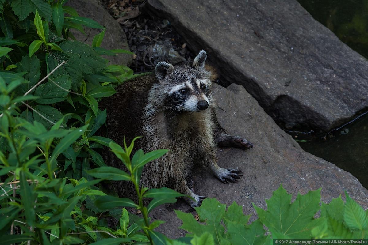 39 New York Central Park animals - Первый раз в Нью-Йорке: Таймс-Сквер, Центральный парк и Чайнатаун